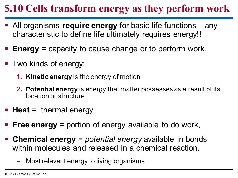 5.10 Cells transform energy as they perform work