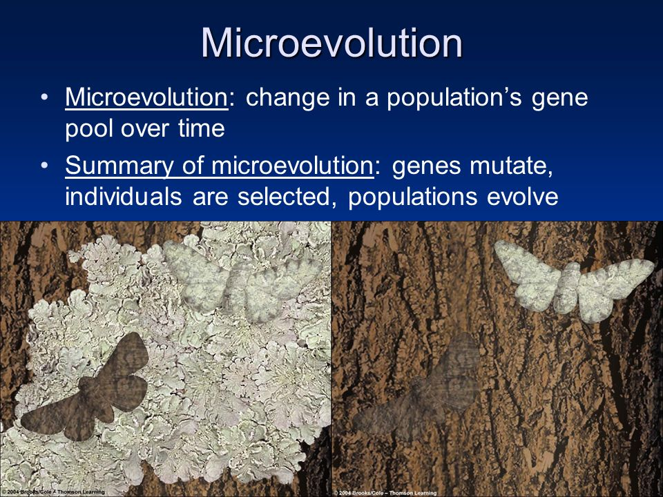 Microevolution Microevolution: change in a population's gene pool over time.