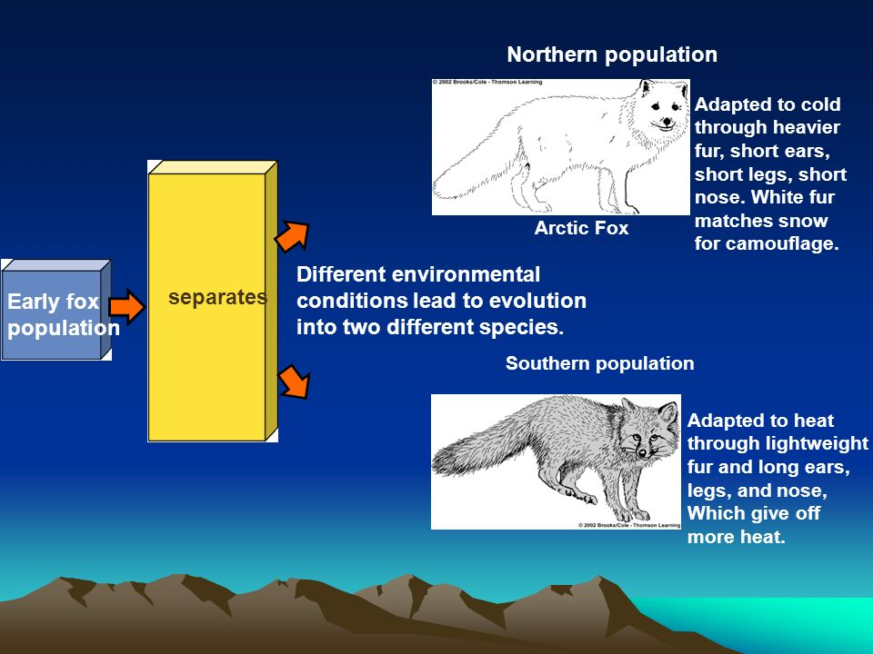 Different environmental conditions lead to evolution