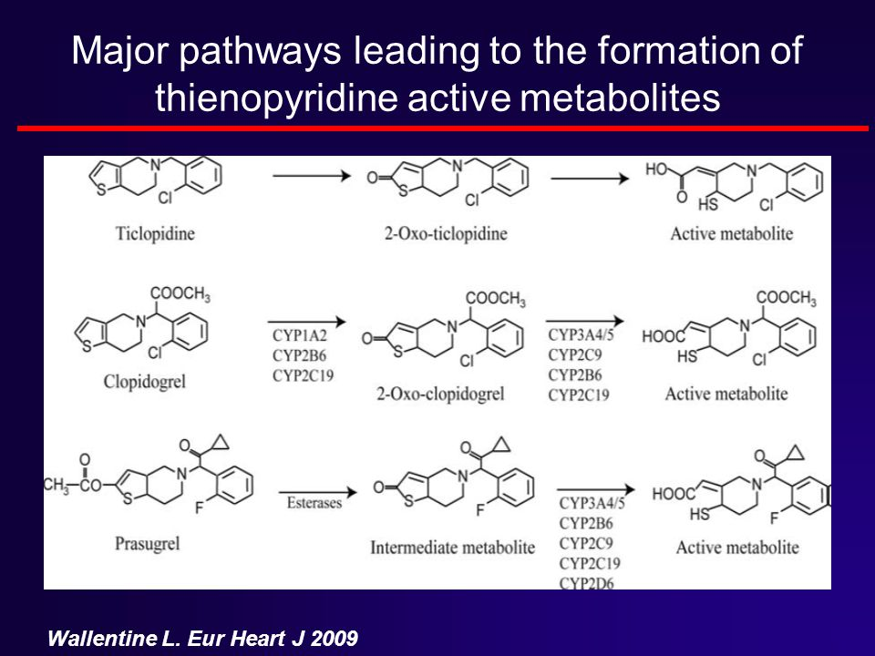 Major pathways leading to the formation of thienopyridine active metabolites