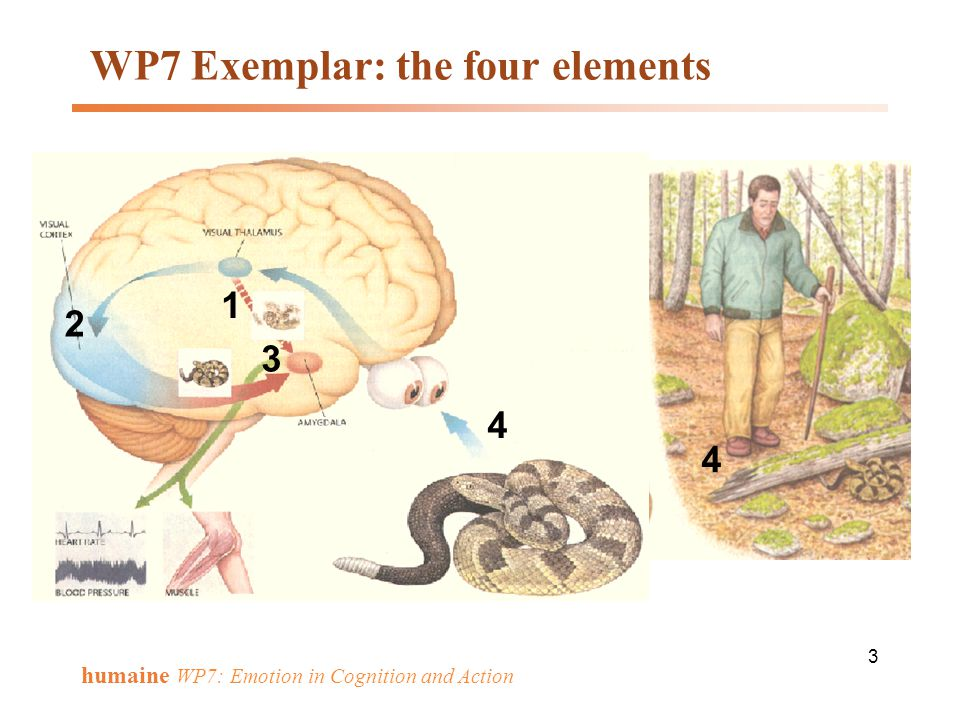 WP7 Exemplar: the four elements