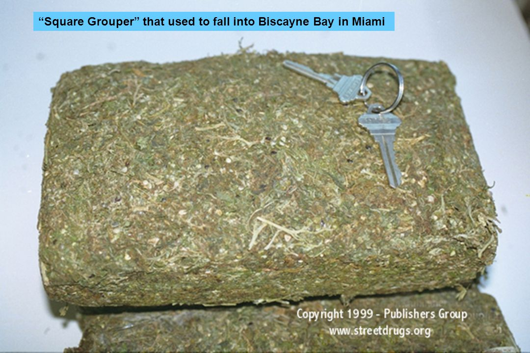 Square Grouper that used to fall into Biscayne Bay in Miami