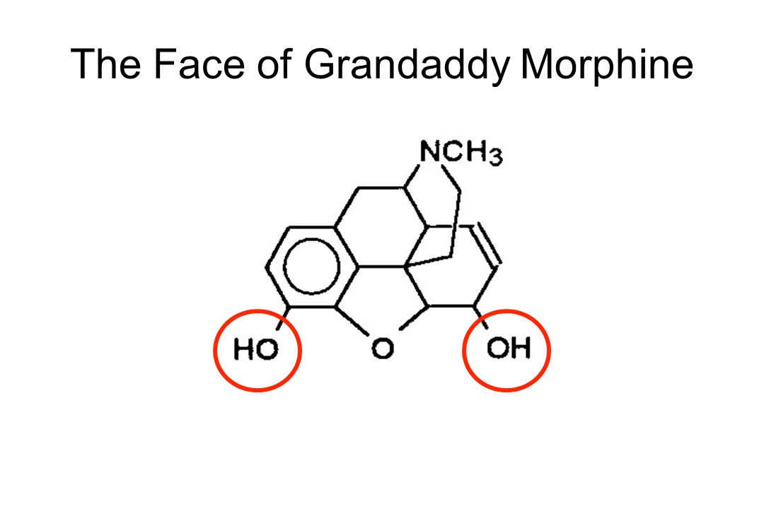 The Face of Grandaddy Morphine