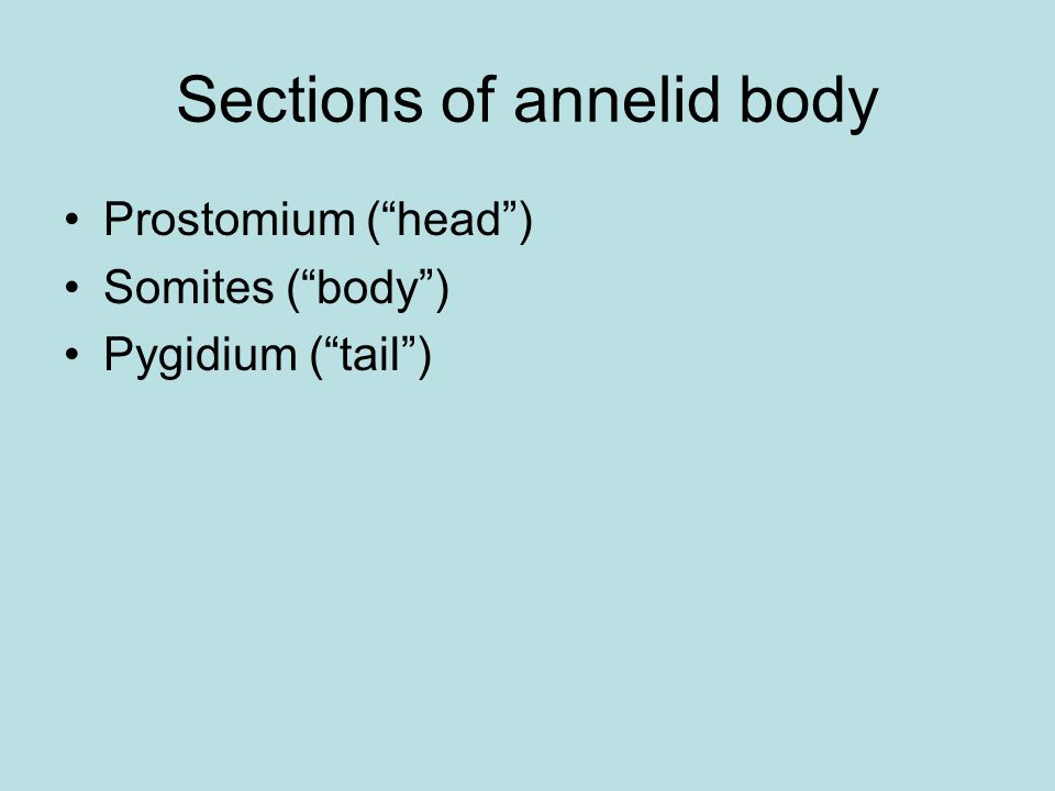 Sections of annelid body