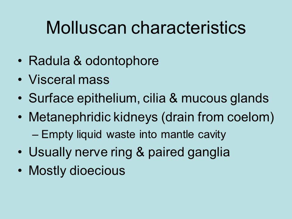Molluscan characteristics