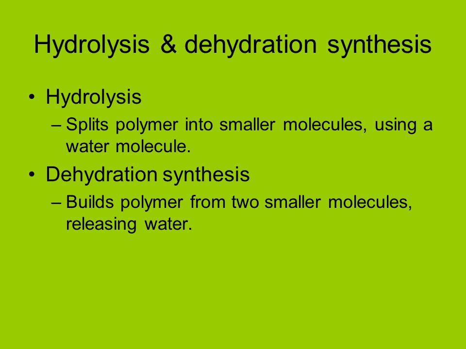 Hydrolysis & dehydration synthesis