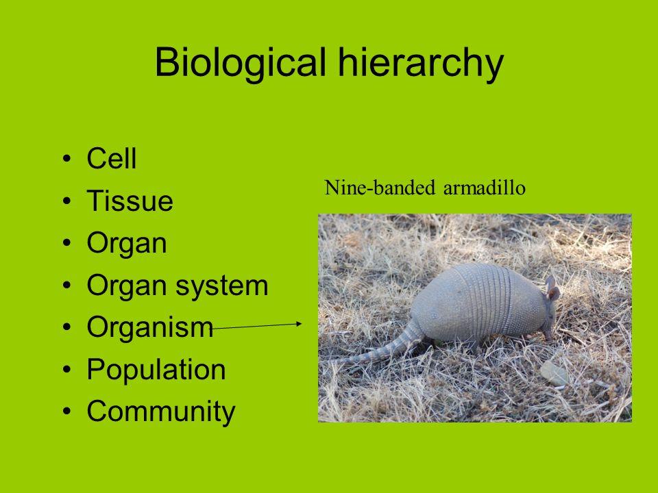 Biological hierarchy Cell Tissue Organ Organ system Organism