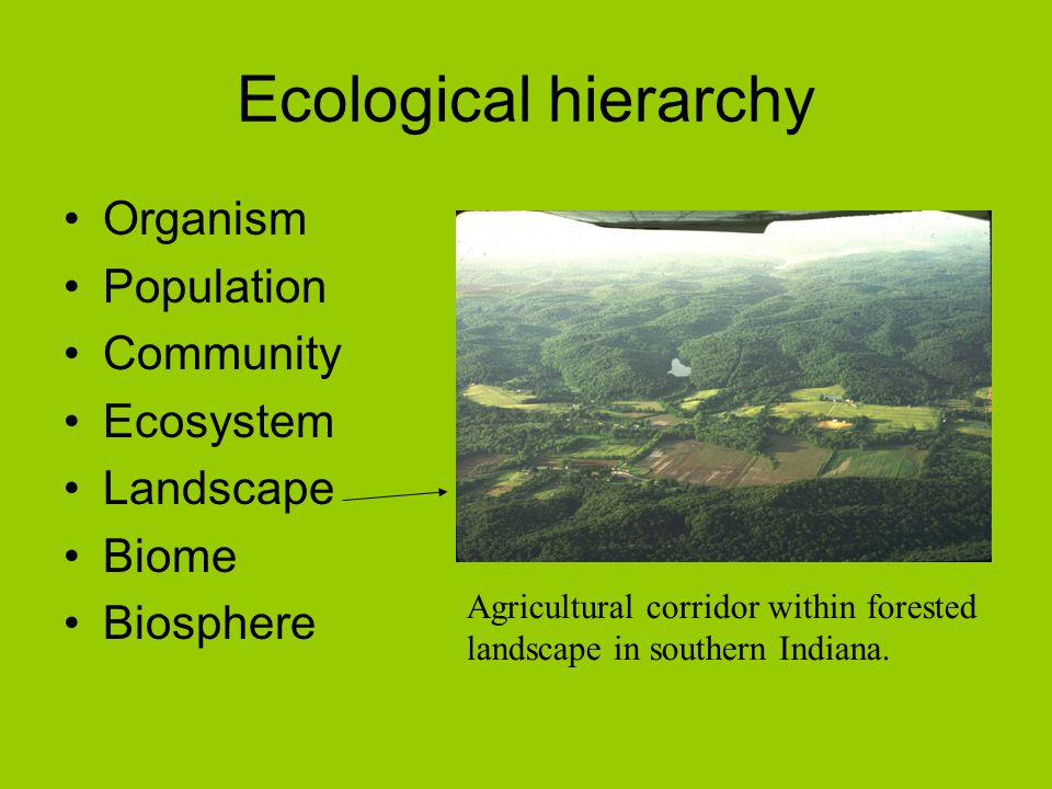 Ecological hierarchy Organism Population Community Ecosystem Landscape