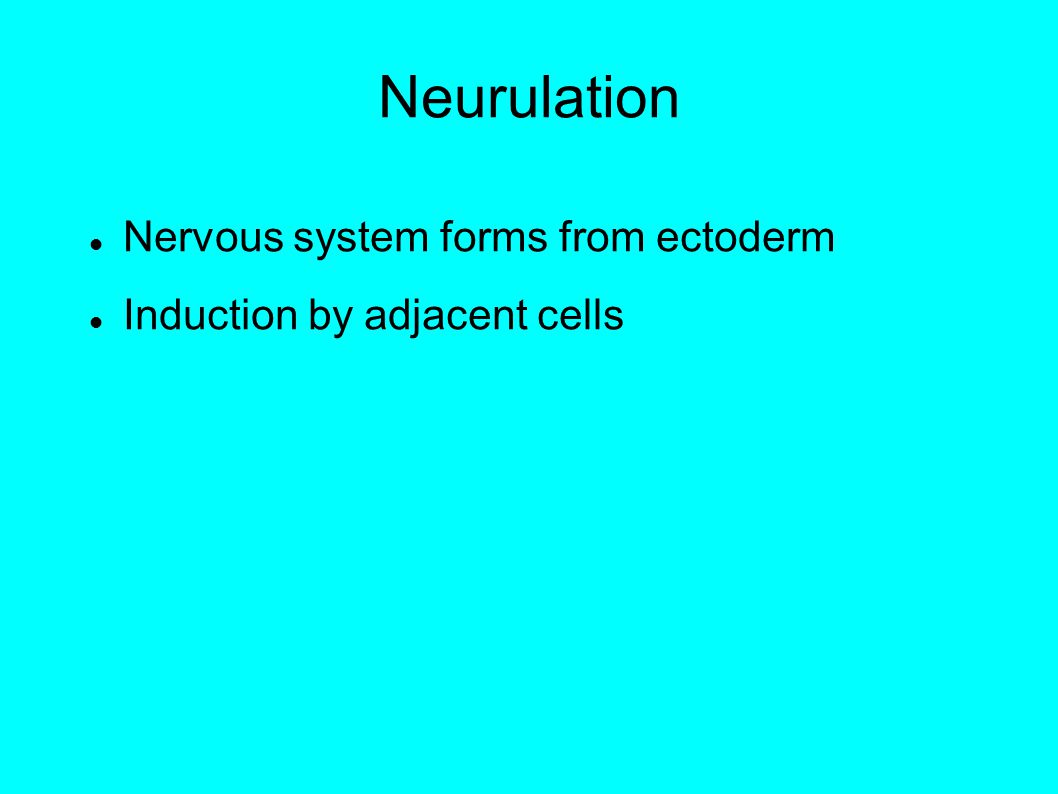 Neurulation Nervous system forms from ectoderm