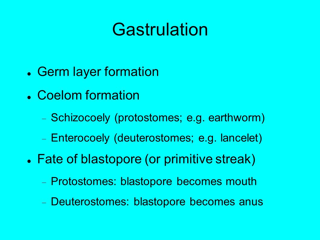 Gastrulation Germ layer formation Coelom formation