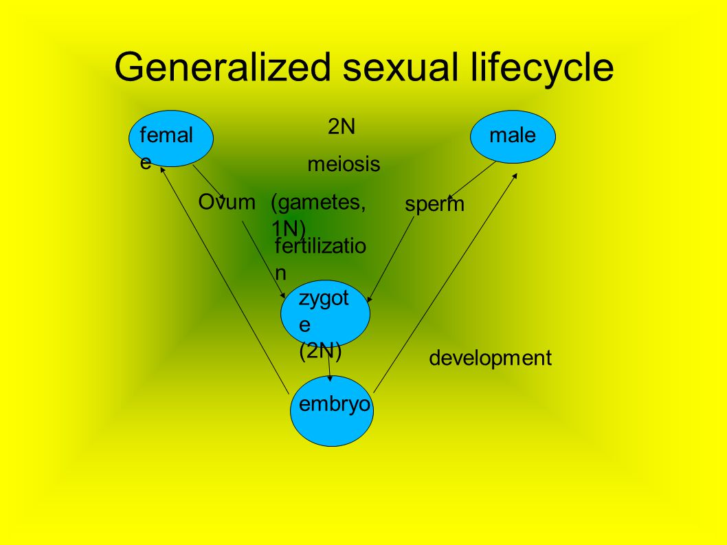 Generalized sexual lifecycle