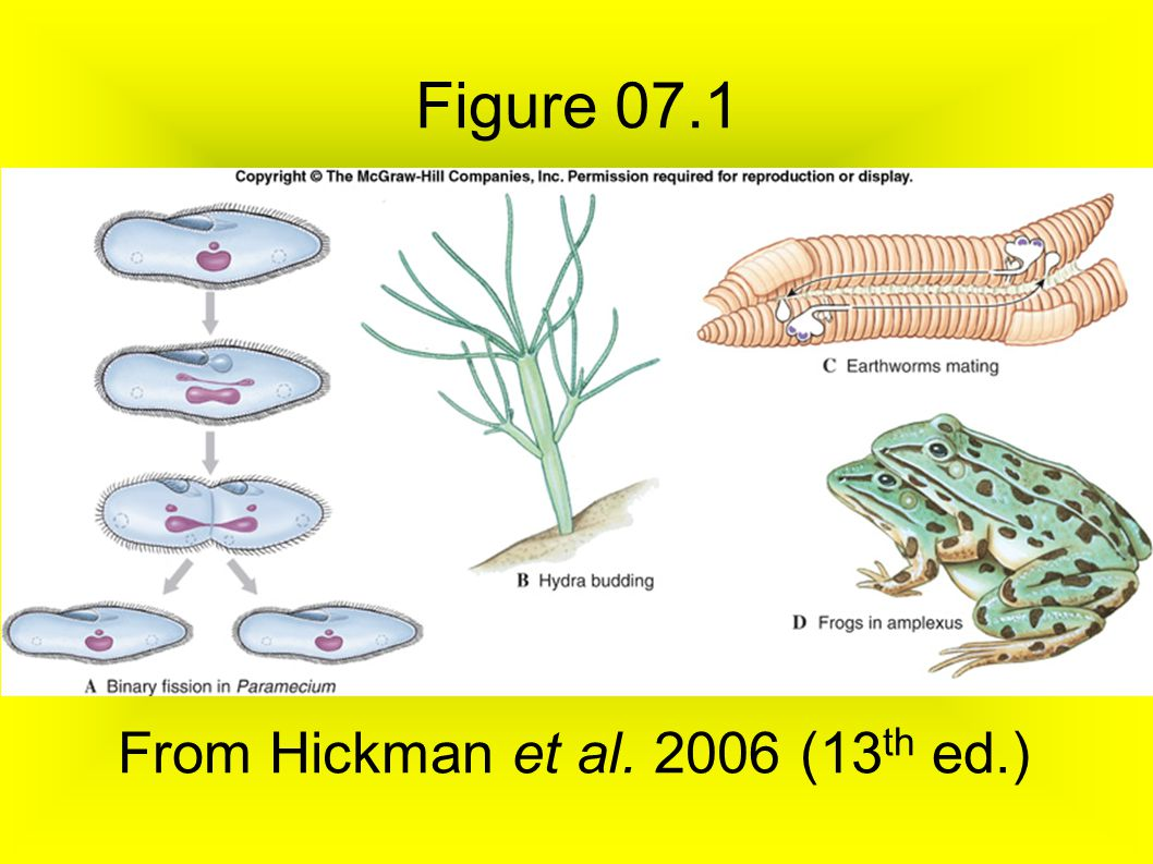 Figure 07.1 From Hickman et al. 2006 (13th ed.)‏