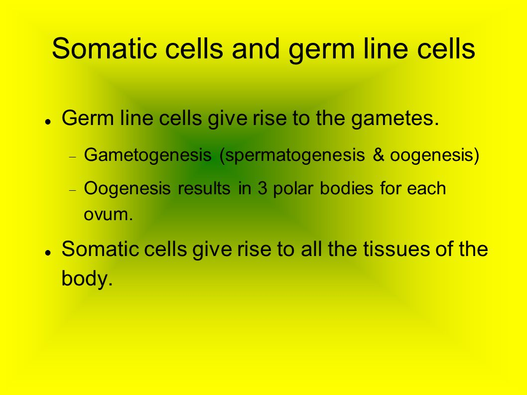 Somatic cells and germ line cells