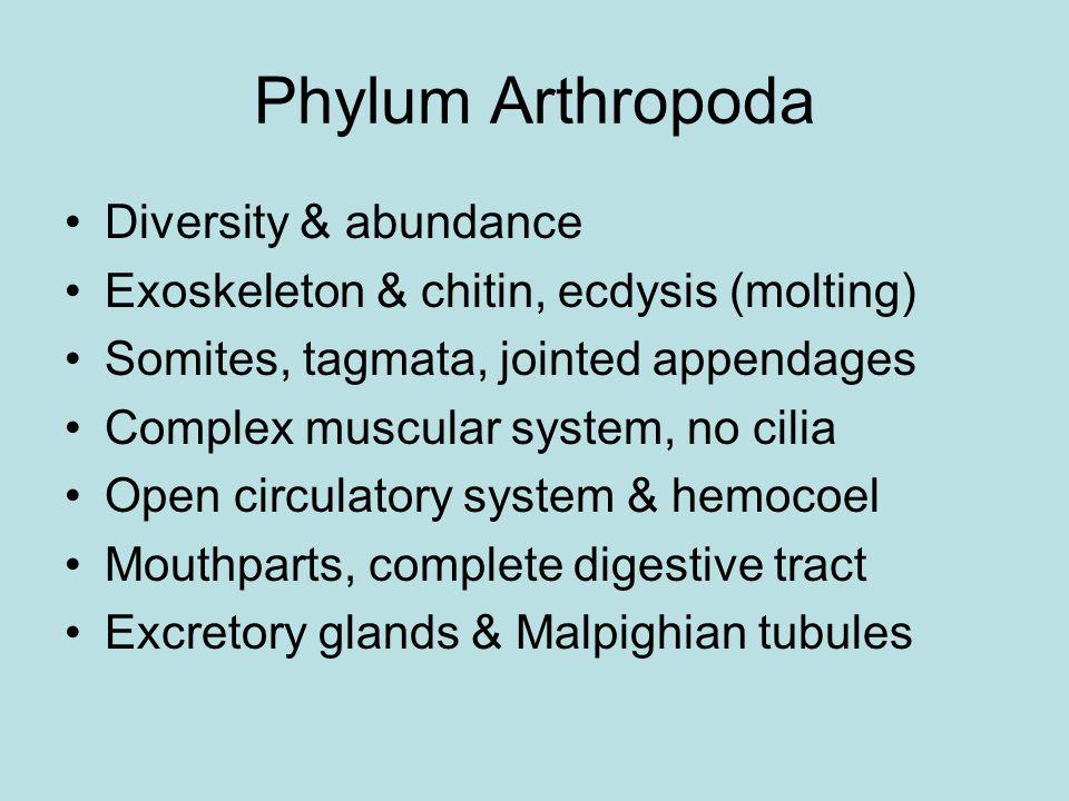 Phylum Arthropoda Diversity & abundance