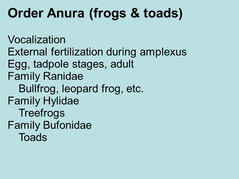 Order Anura (frogs & toads)‏
