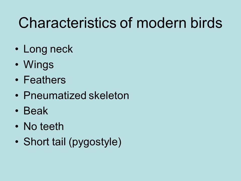 Characteristics of modern birds
