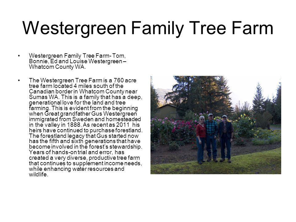 Westergreen Family Tree Farm