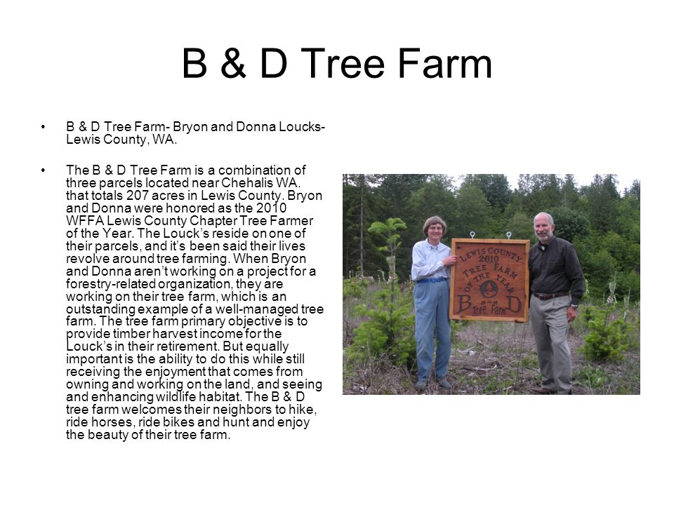 B & D Tree Farm B & D Tree Farm- Bryon and Donna Loucks- Lewis County, WA.
