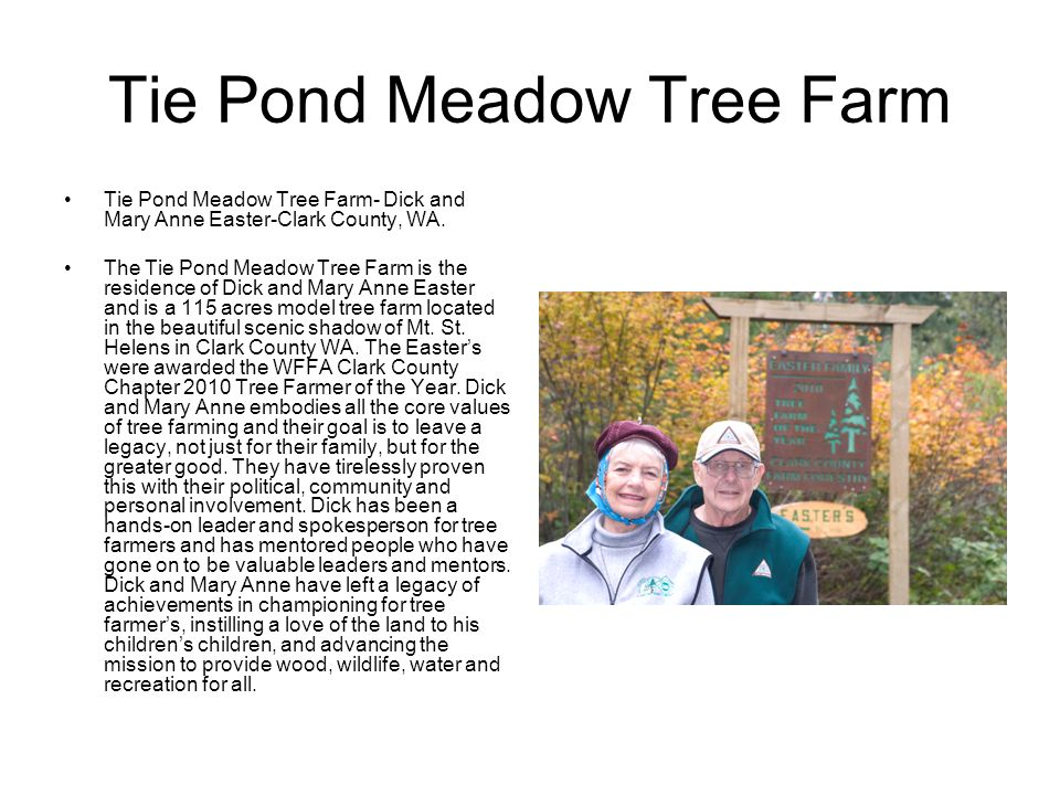 Tie Pond Meadow Tree Farm