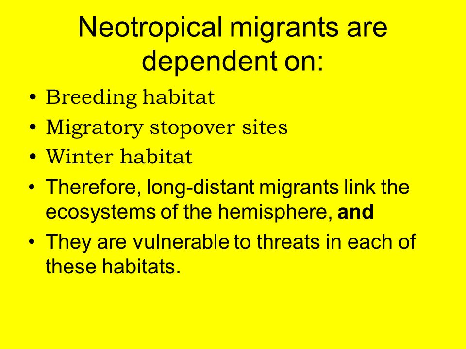 Neotropical migrants are dependent on: