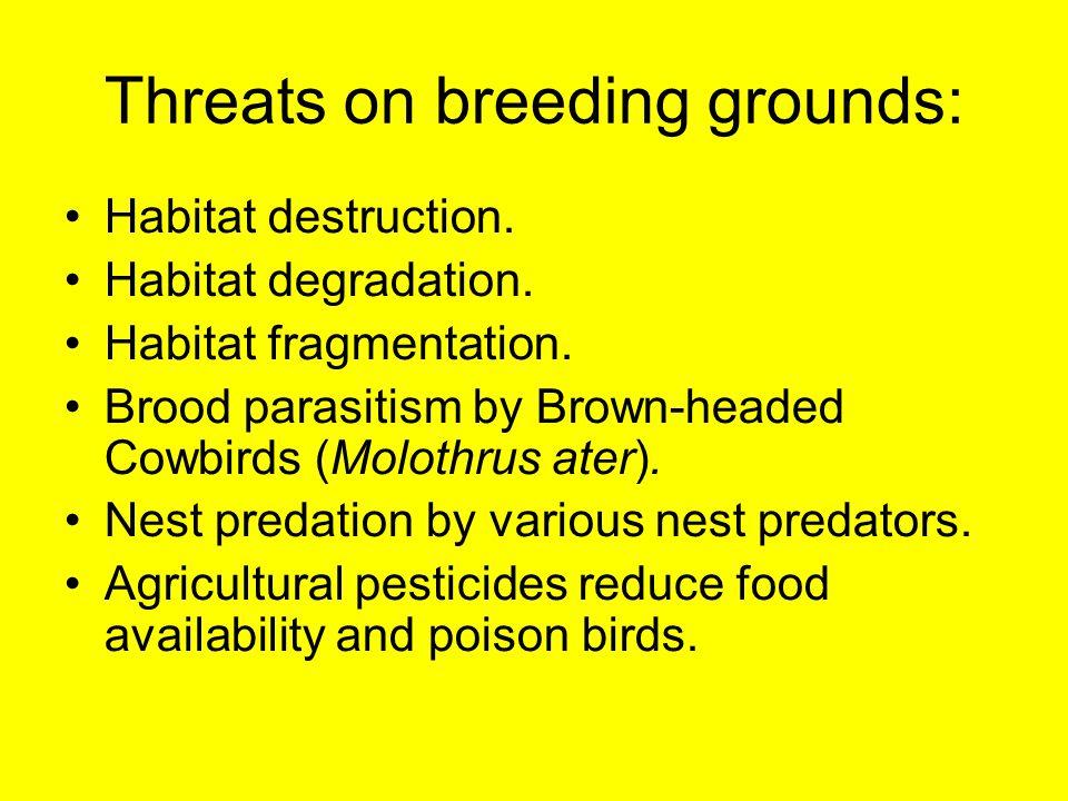 Threats on breeding grounds: