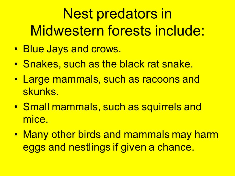 Nest predators in Midwestern forests include: