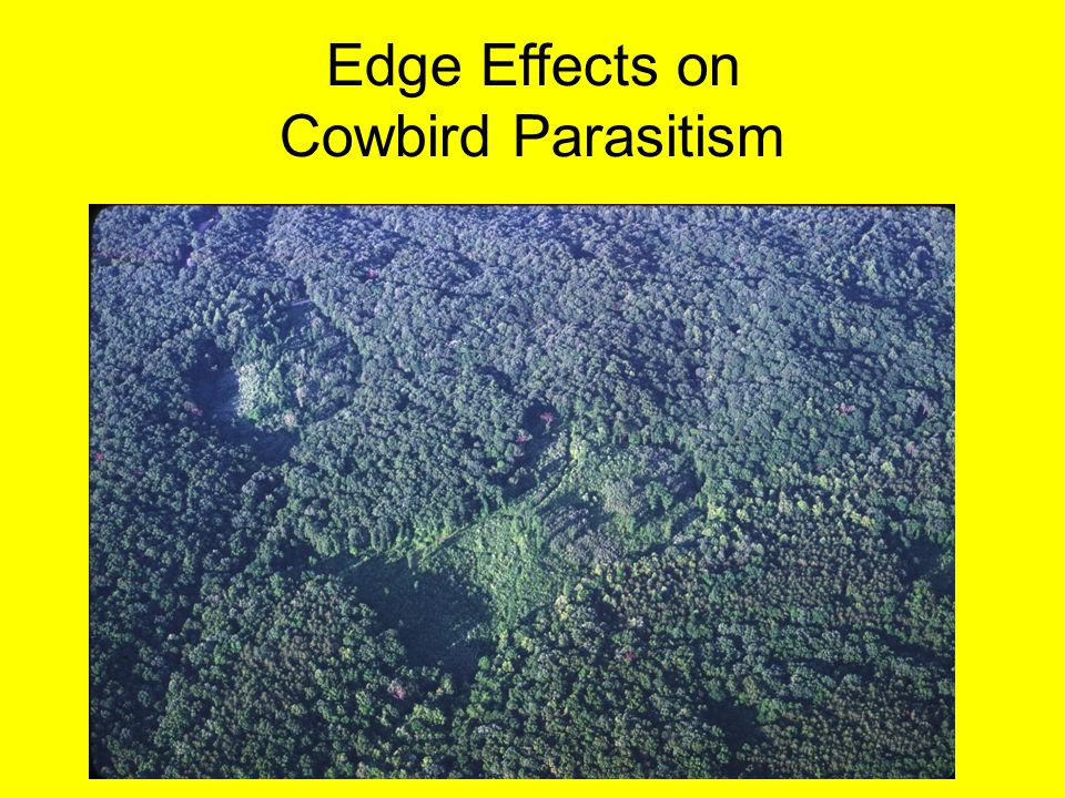 Edge Effects on Cowbird Parasitism