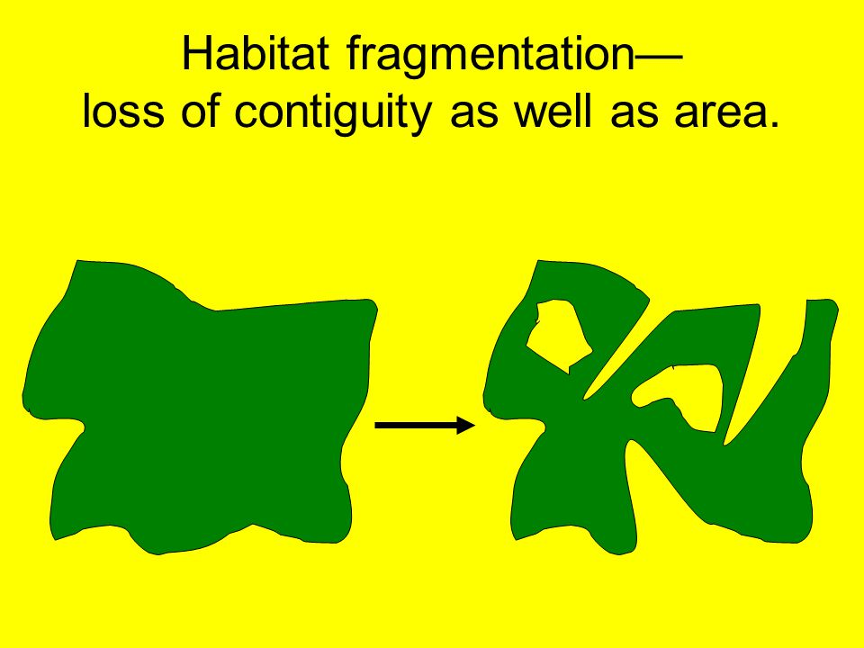 Habitat fragmentation— loss of contiguity as well as area.