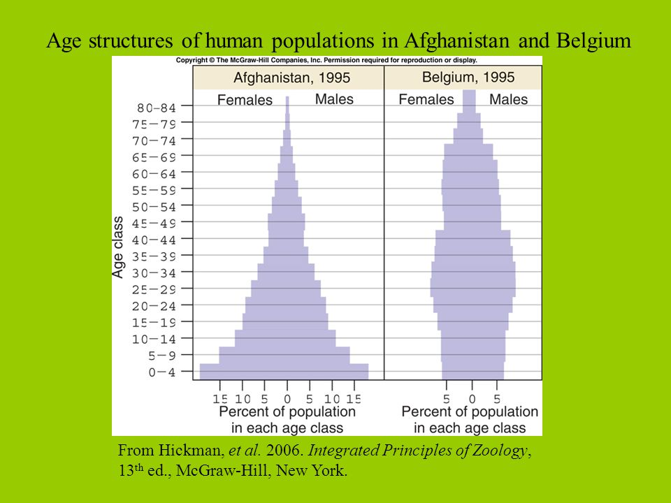 Age structures of human populations in Afghanistan and Belgium
