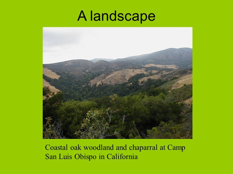 A landscape Coastal oak woodland and chaparral at Camp San Luis Obispo in California