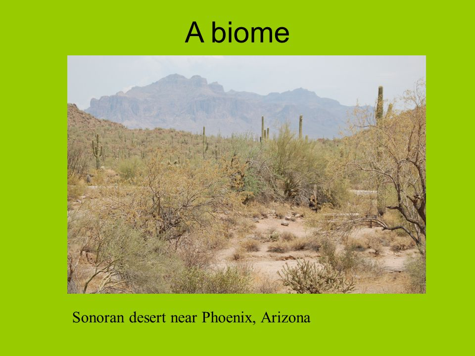 A biome Sonoran desert near Phoenix, Arizona