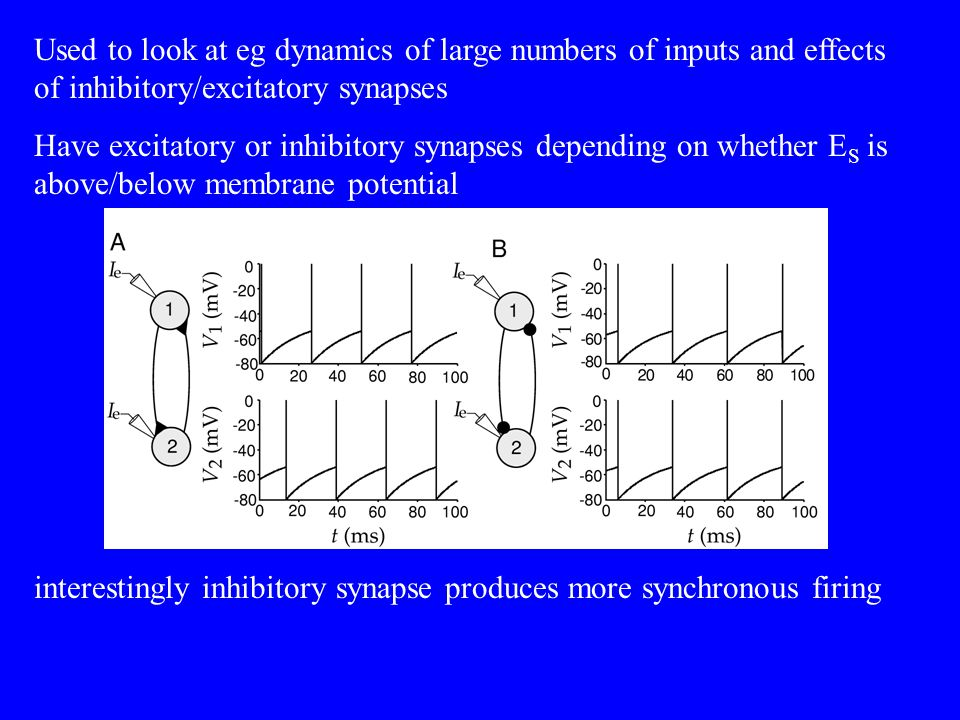 Used to look at eg dynamics of large numbers of inputs and effects of inhibitory/excitatory synapses