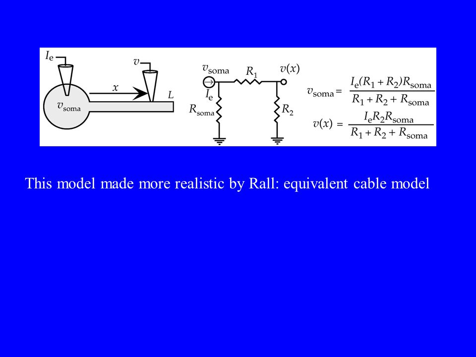This model made more realistic by Rall: equivalent cable model