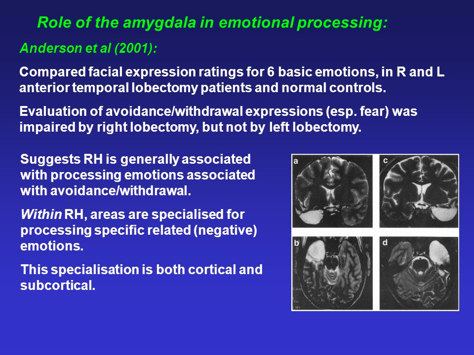 Role of the amygdala in emotional processing: