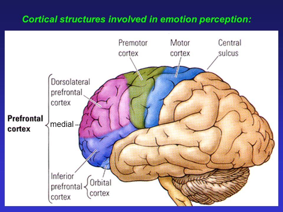 Cortical structures involved in emotion perception: