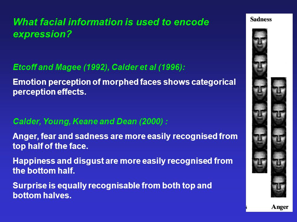 What facial information is used to encode expression
