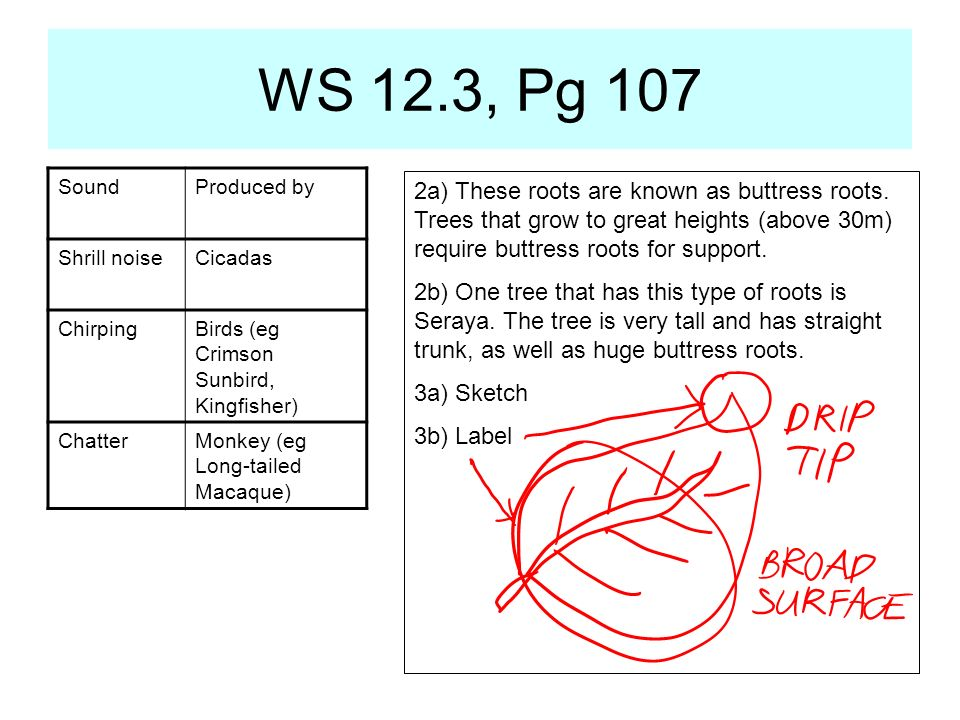 WS 12.3, Pg 107 Sound. Produced by. Shrill noise. Cicadas. Chirping. Birds (eg Crimson Sunbird, Kingfisher)