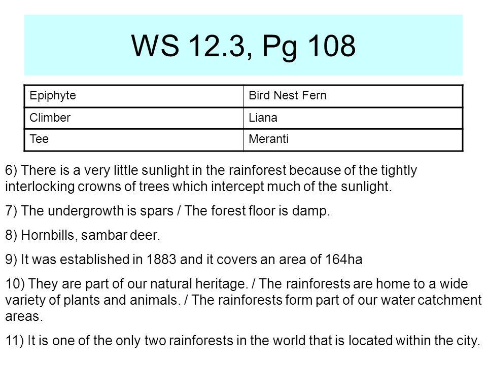 WS 12.3, Pg 108 Epiphyte. Bird Nest Fern. Climber. Liana. Tee. Meranti.