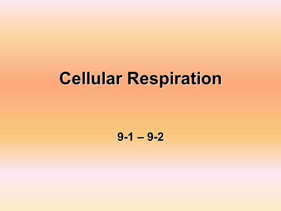 Cellular Respiration 9-1 – 9-2