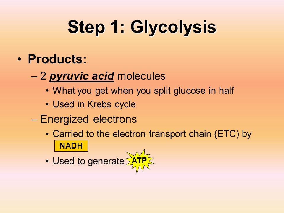 Step 1: Glycolysis Products: 2 pyruvic acid molecules