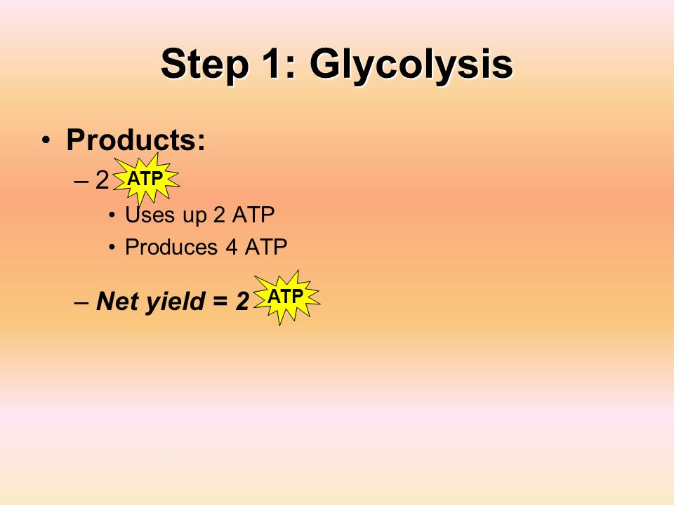 Step 1: Glycolysis Products: 2 Net yield = 2 Uses up 2 ATP