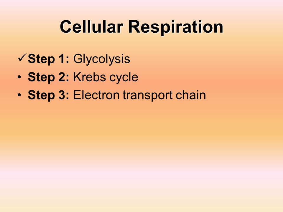 Cellular Respiration Step 1: Glycolysis Step 2: Krebs cycle