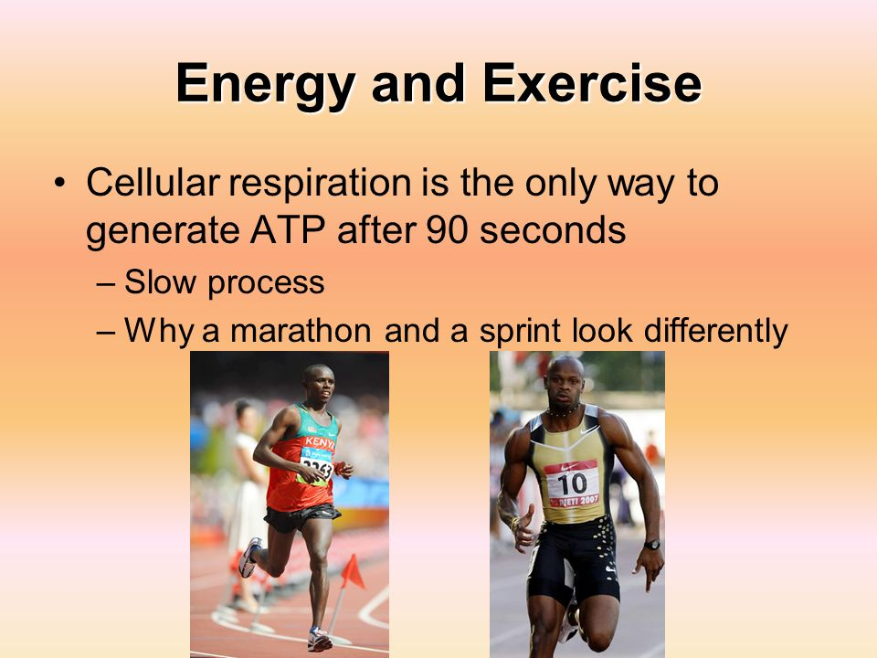 Energy and Exercise Cellular respiration is the only way to generate ATP after 90 seconds. Slow process.