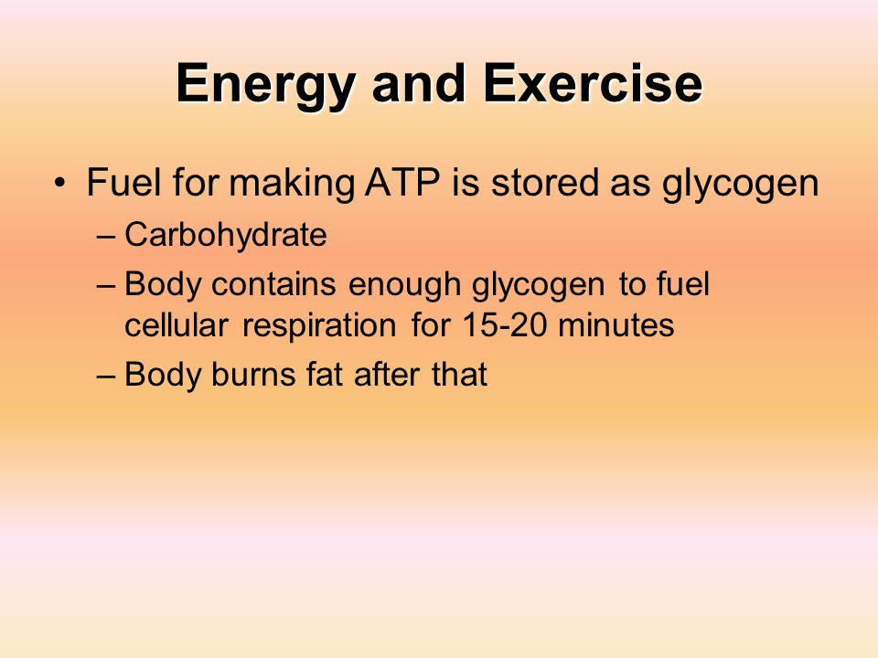 Energy and Exercise Fuel for making ATP is stored as glycogen