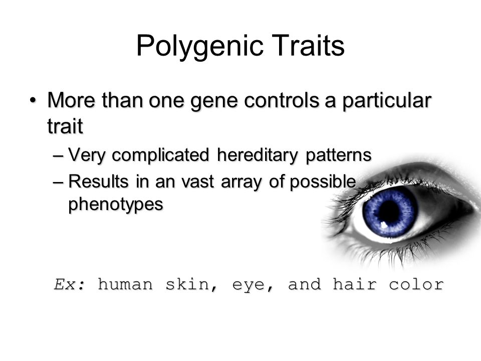 Polygenic Traits More than one gene controls a particular trait