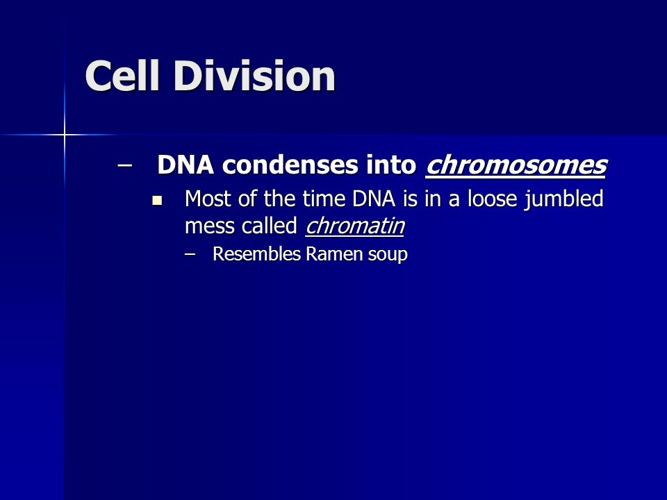 Cell Division DNA condenses into chromosomes