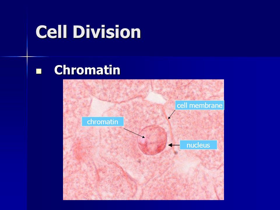 Cell Division Chromatin cell membrane chromatin nucleus