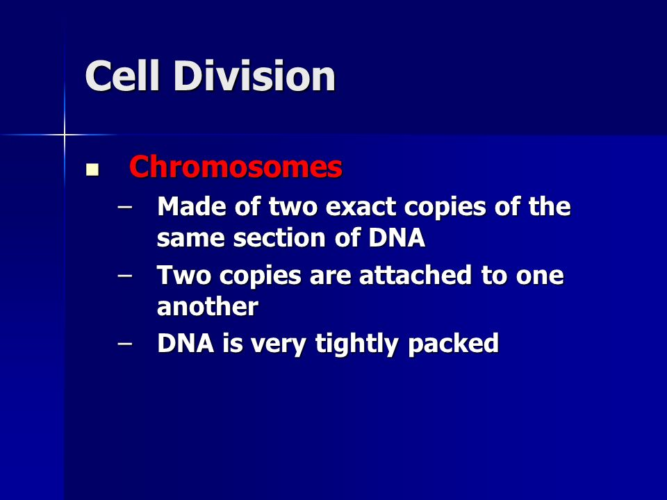 Cell Division Chromosomes