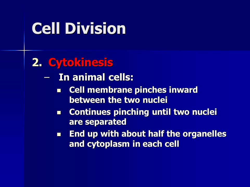 Cell Division Cytokinesis In animal cells: