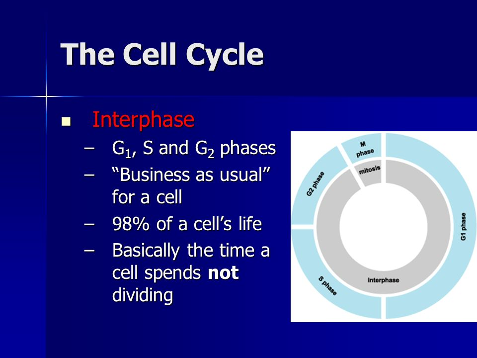 The Cell Cycle Interphase G1, S and G2 phases